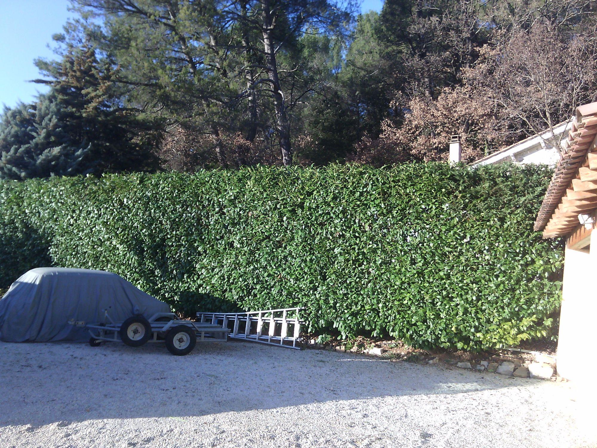 V g taux pour haie dans le var jardinier paysagiste saint maximin var ja d e espaces verts - Haie anti bruit ...