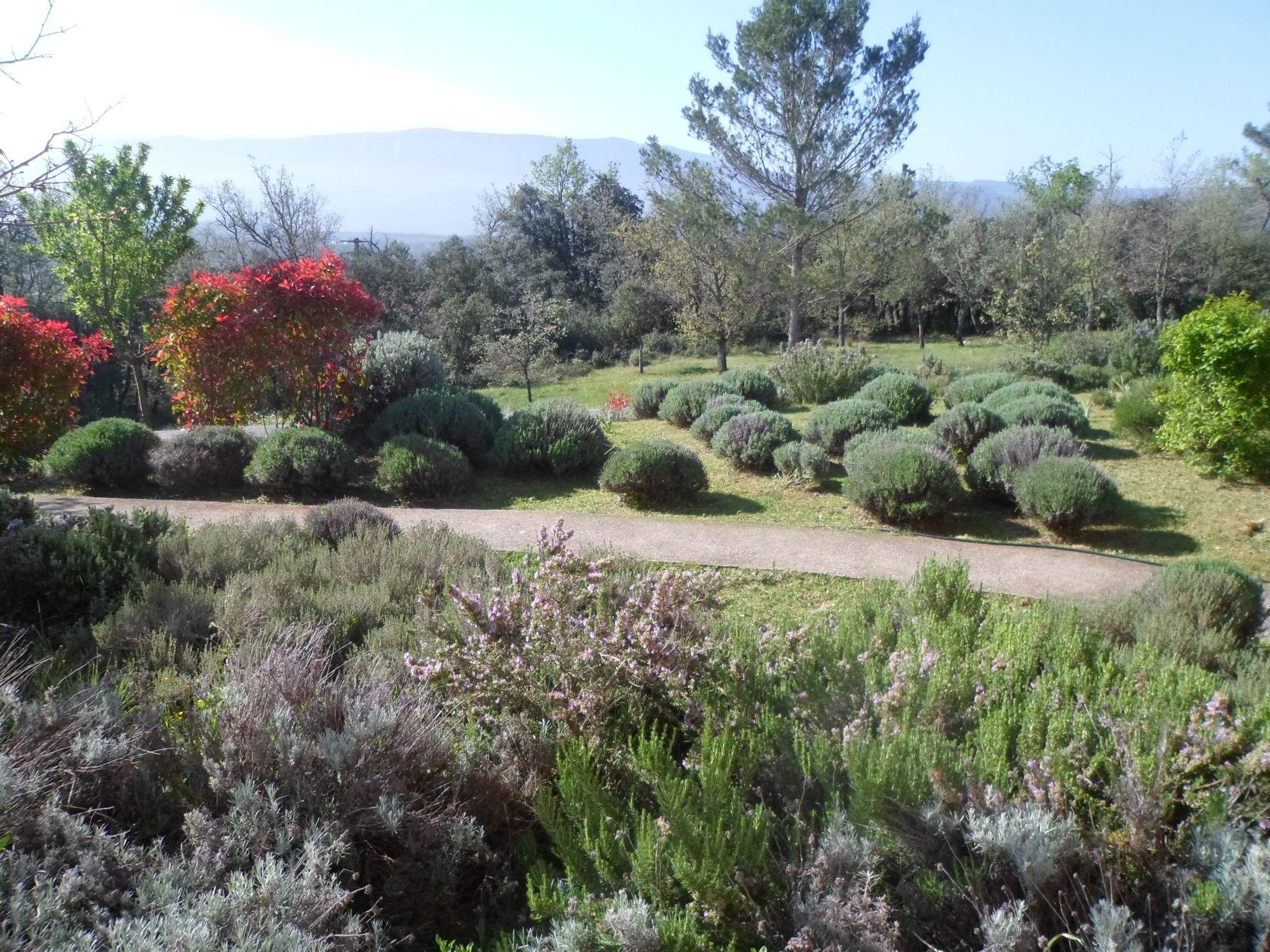 Entretien d 39 un jardin proven al dans le var jardinier for Entretien jardin castelnau le lez