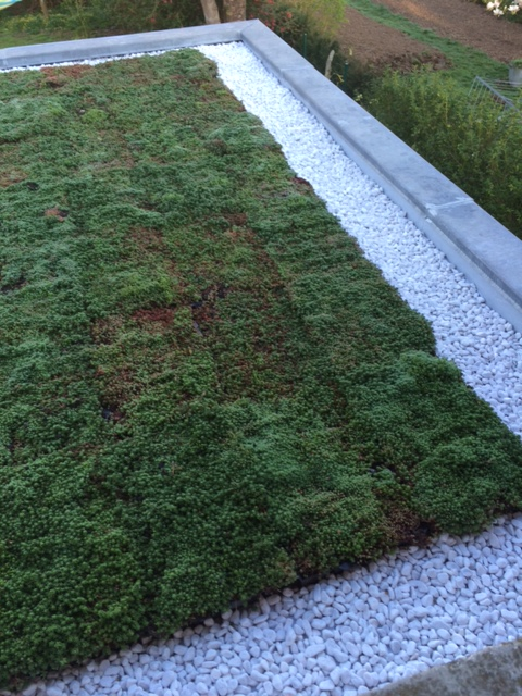 Toiture v g talis e dans le var jardinier paysagiste saint maximin var ja - Plante toiture vegetalisee ...